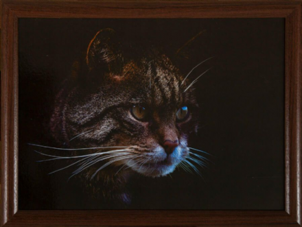 Stalking Cat Lap Tray